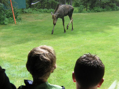 Scouts Canada Scouts Canada Wildlife Encounter