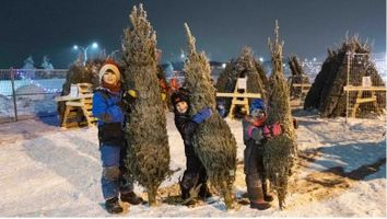 Yellowknife Scouts' Christmas trees go on sale Thursday