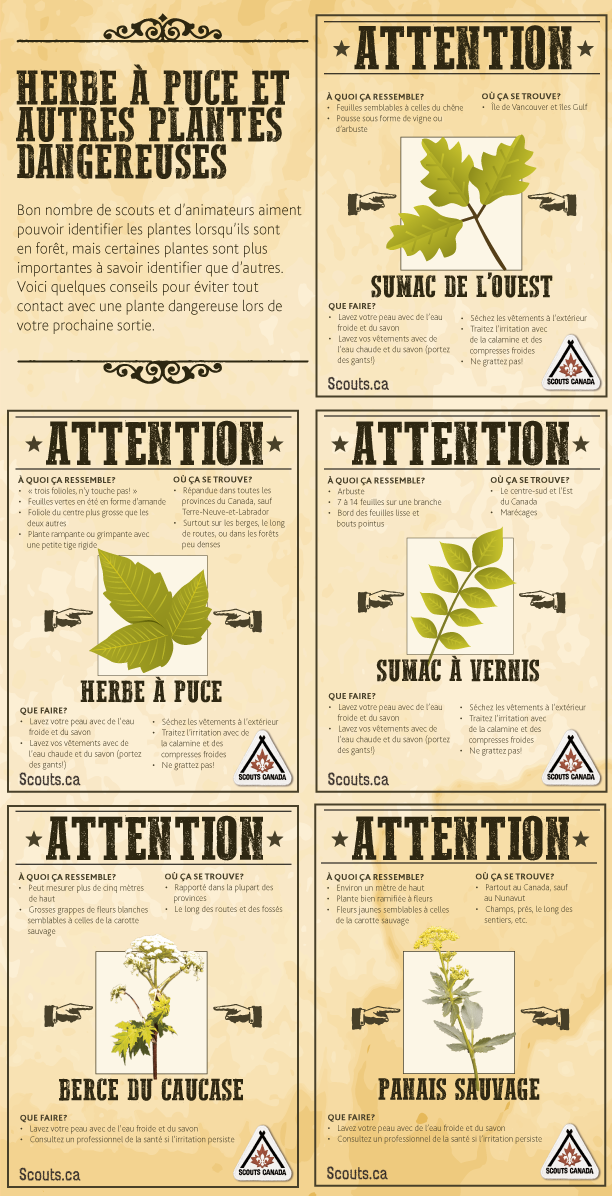 August-Safety-tip-Poison-Ivy-and-Other-Hazardous-Plants-FR