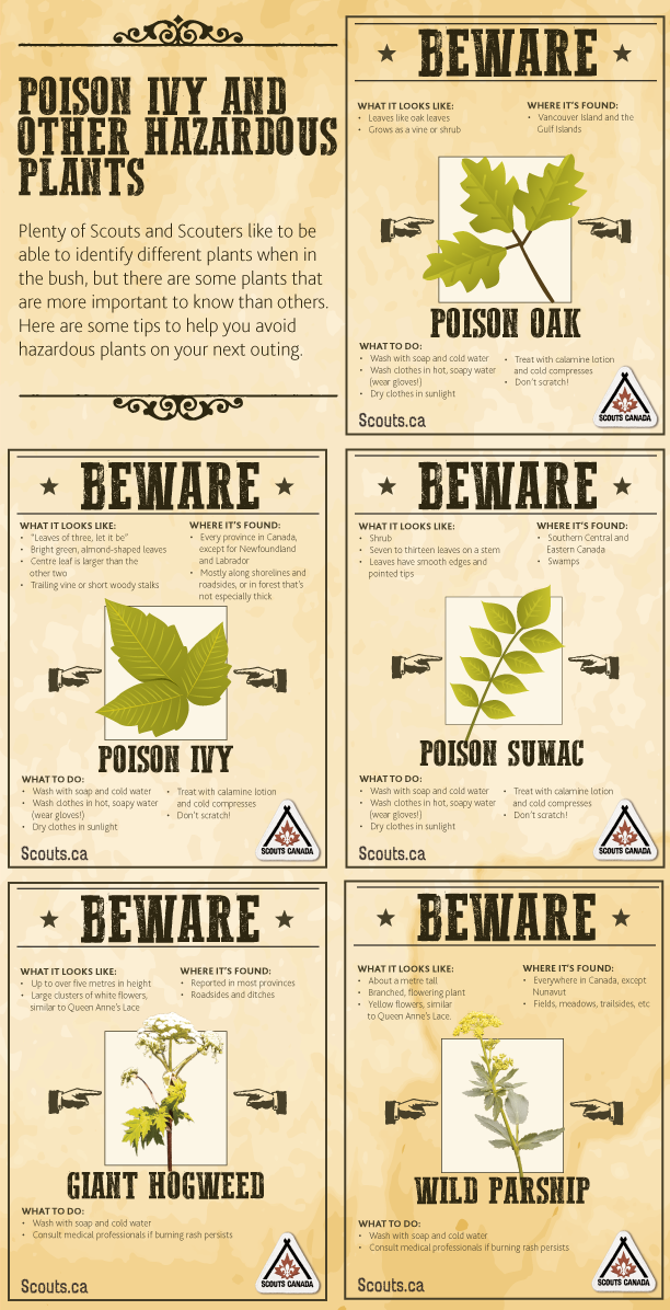 August-Safety-tip-Poison-Ivy-and-Other-Hazardous-Plants